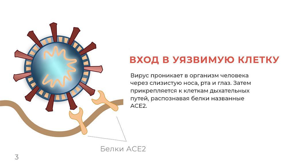 Коронавирус - инфографика